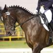 ¿Cuándo surge la equitación?