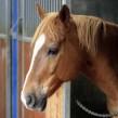Cuidados del caballo (I): clases de mantas
