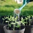 Cultivo urbano hidropónico