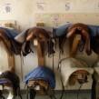 ¿De qué trata el deporte ecuestre del reining?