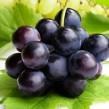 Exportación de uva en Argentina