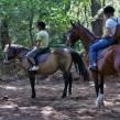 Iniciación: ejercicios de volteo en equitación