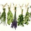 La Caléndula o Maravilla: planta azteca