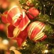 ¿Por qué la Flor de Pascua es típica de la Navidad?