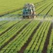 Producción de yerba mate en Argentina