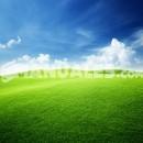 Abono verde en agricultura ecológica