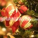 ¿Cuál es la planta tradicional de Navidad?