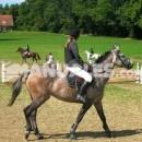 ¿En qué consiste el concurso completo en equitación?