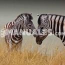 ¿En qué país está el Parque de Serengueti?