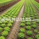 La chirivía: una verdura desconocida