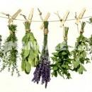 La menta y sus usos como planta medicinal