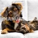 ¿Mueven los perros la cola cuando están alegres?