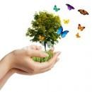 Plantas que abonan nuestra huerta: Abono Verde