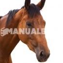 ¿Qué es la doma clásica en equitación?