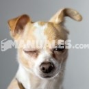 Trucos para un descanso placentero de mi perro